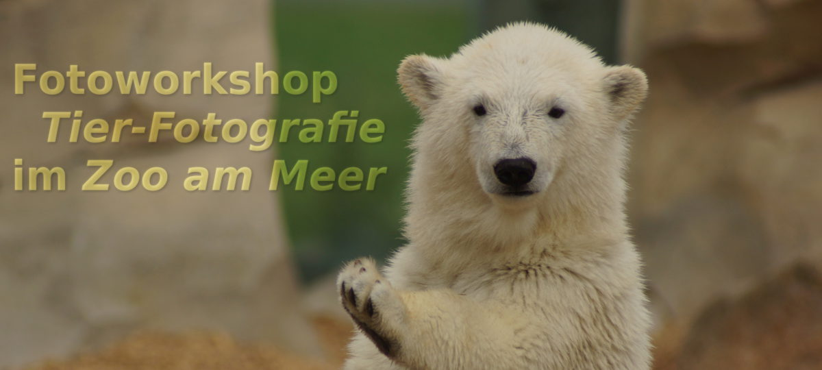 "Fotoworkshop ""Tierfotografie"" im ""Zoo am Meer"" in Bremerhaven"