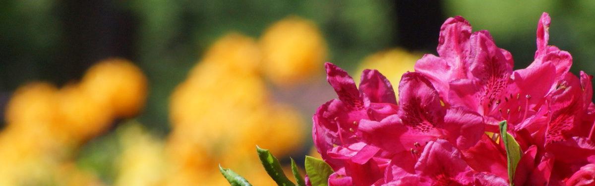 Ausflugstipp: Rhododendronpark Bremen