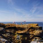 Steilküste, Black Head, County Clare